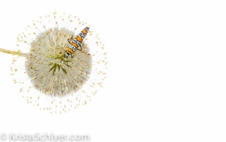 Anacostia 8-2012-7585