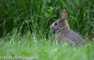 A bunny in the Anacostia watershed.