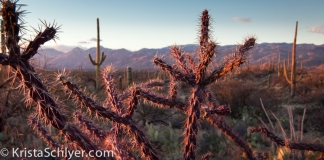 3 Sunset in the Sonoran Desert with cholla and saguaro cactus.