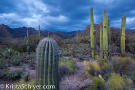 Sunset in Sabino Canyon, Tucson Arizona.