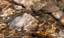 36b. A frog in a desert stream.