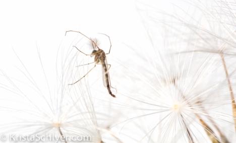 KSchlyer-Lilylake-BioBlitz-8485