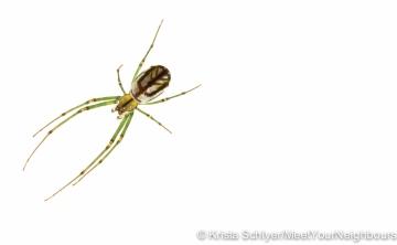 Spider-ID pending