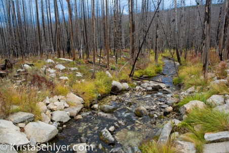 Burned forest-Clearwater National Forest