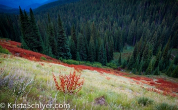 Clearwater National Forest, Idaho